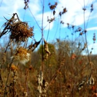 Hiking with Kids in Minnesota: Whitetail Woods Park