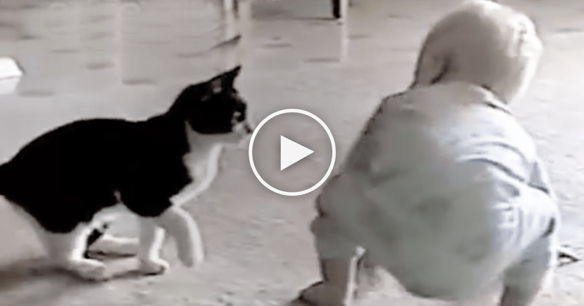 Newborn Babies And Cats Cat Tries To Attack The Baby But Keep Watching Till The