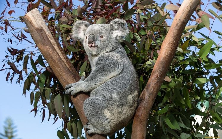 Cute Labrador Puppy Wallpaper Koala Windows 10 Theme Themepack Me