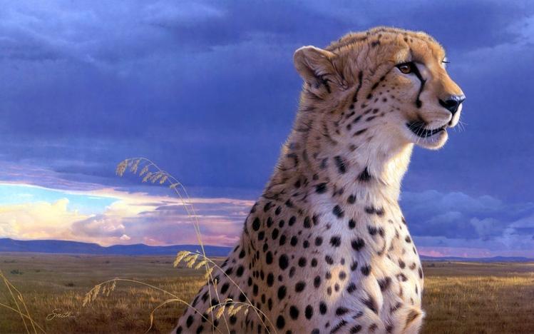Cheetah Wallpaper Hd Cheetah Windows 10 Theme Themepack Me