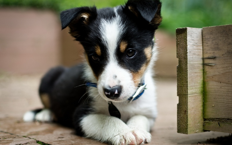 Very Cute Wallpapers For Desktop Puppy Windows 10 Theme Themepack Me