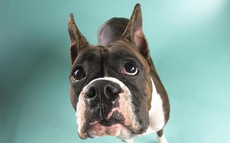 Cute Pet Animals Hd Wallpapers Dog Windows 10 Theme Themepack Me