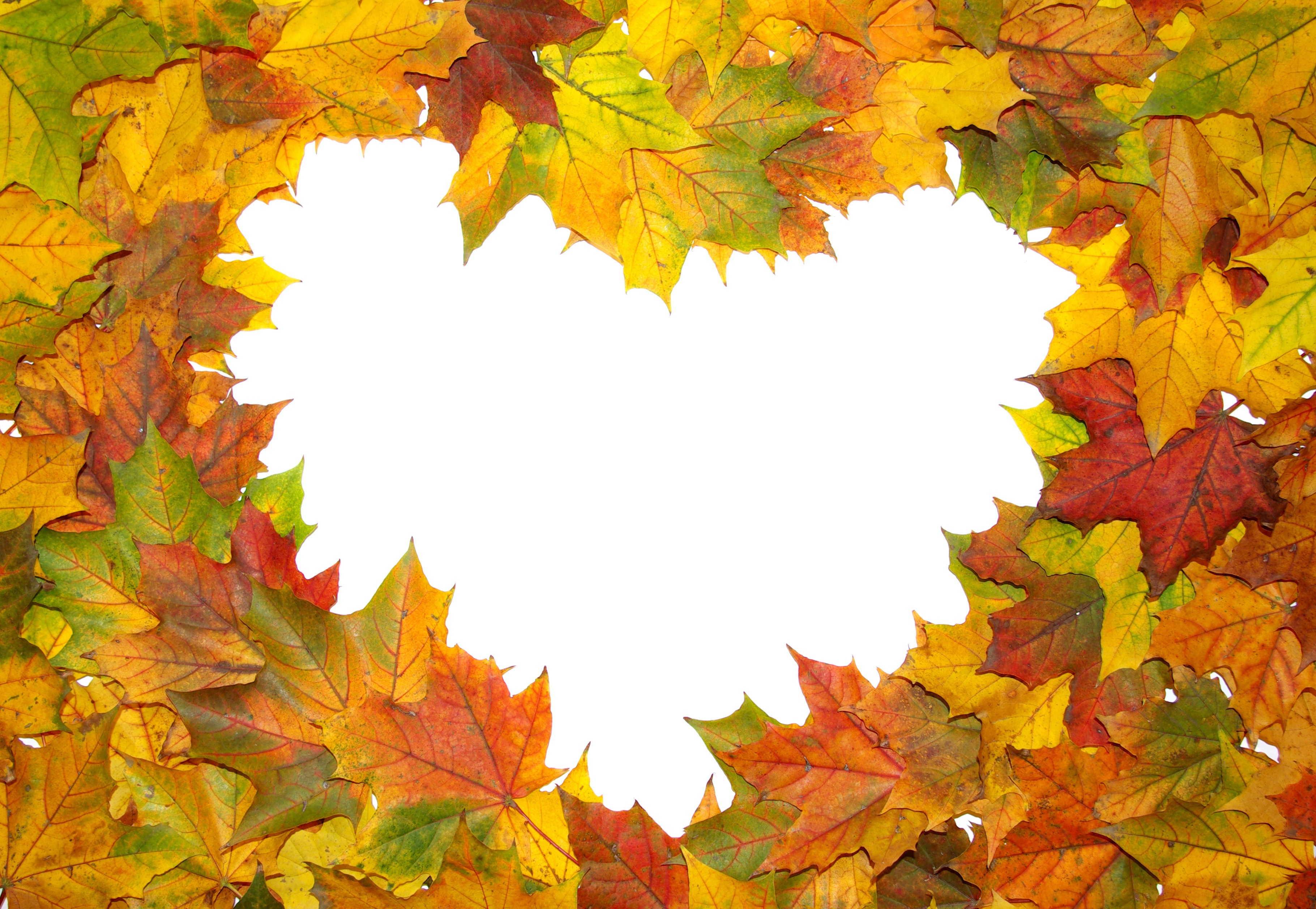 Maple Leaf Wallpaper For Fall Season 15 Most Romantic Autumn Desktop Wallpapers Themescompany