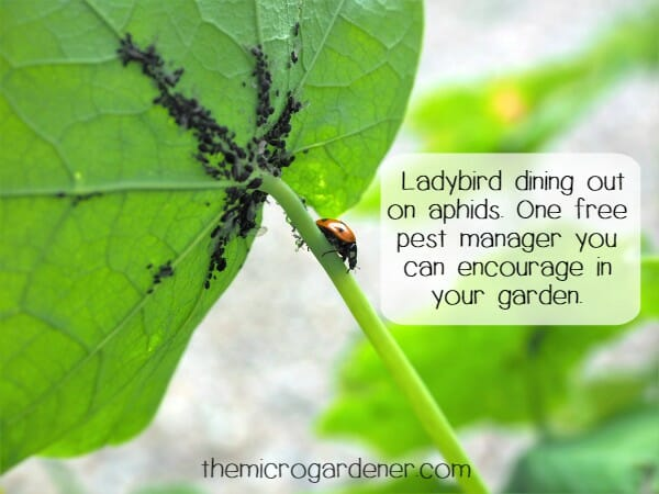 7 Sustainable Garden Design Tips - The Micro Gardener - sustainable garden design