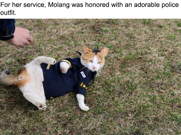 07-molang-police-cat-710x472