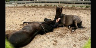 When She Lays Down In The Horses' Pen, I Was Blown Away. This Is INCREDIBLE!