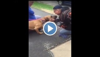 Adorable Dog Cannot Contain His Excitement After Being Reunited With Owner TWO YEARS After Being Stolen