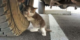 A Guy Found A Scared Kitten Under A Truck And Just Couldn't Say No To Her