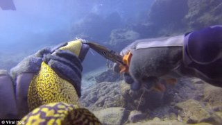 Incredible footage captures moment diver rescues a Moray sea eel wrapped up in fishing line underwater
