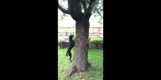 Squirrel Outsmarts Dog As They Play Chase Around A Tree
