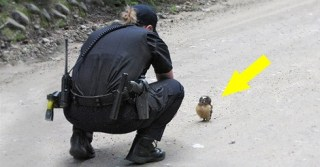 This brave little baby owl blocked the path of a police car