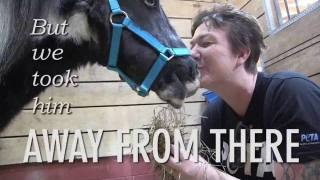 A Mini Horse Lived In The Worst Conditions…Until These Angels Saved His Life