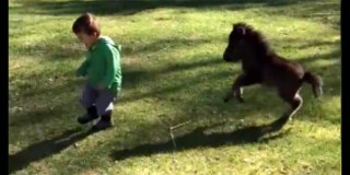 Little Boy Was Chased By A Tiny Horse. When He Finally Turns Around? I Can't Stop Smiling!