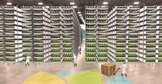 World's Largest Vertical Farm Near NYC Uses 95% Less Water and No Pesticides
