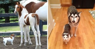 12 Animal Brothers From Other Mothers