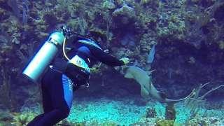 Baby Nurse Shark Wants To Be Pet