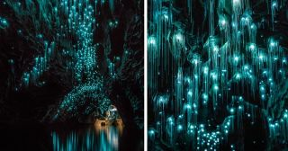 """This Glow Worm-Dotted Cave In New Zealand Is Literally """"Avatar"""" IRL"""