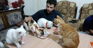 Selfless Man Stays Behind in War-Torn Syria to Voluntarily Care for Hundreds of Stray Cats