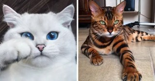 20 Of The Most Beautiful Cats In The World