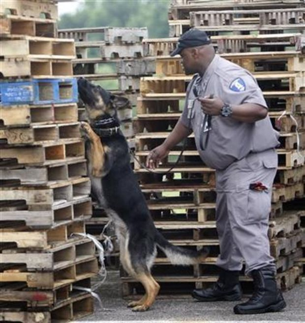 In this July 8, 2014 photograph, K-9 officer Blek, a two-year-old German Sheppard, and trainer/handler Sgt James Tunstall search for contraband around a storage area at the Marshall County Correctional Facility in Holly Springs, Miss. (AP photo