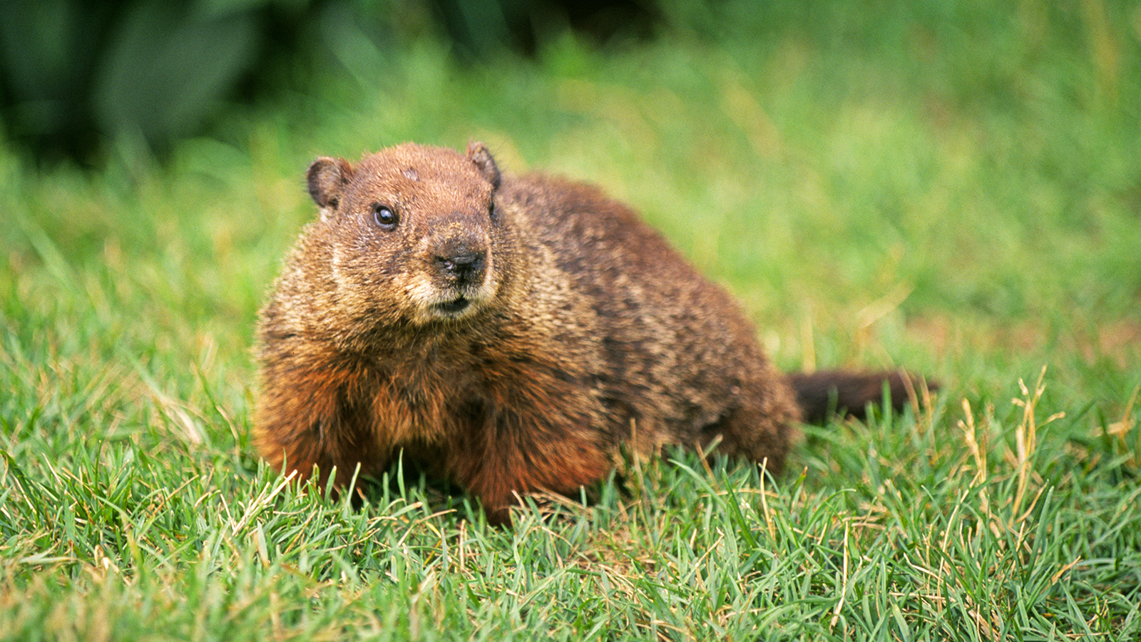 Groundhogs The Next Thing Groundhogs Plus The Whole Story