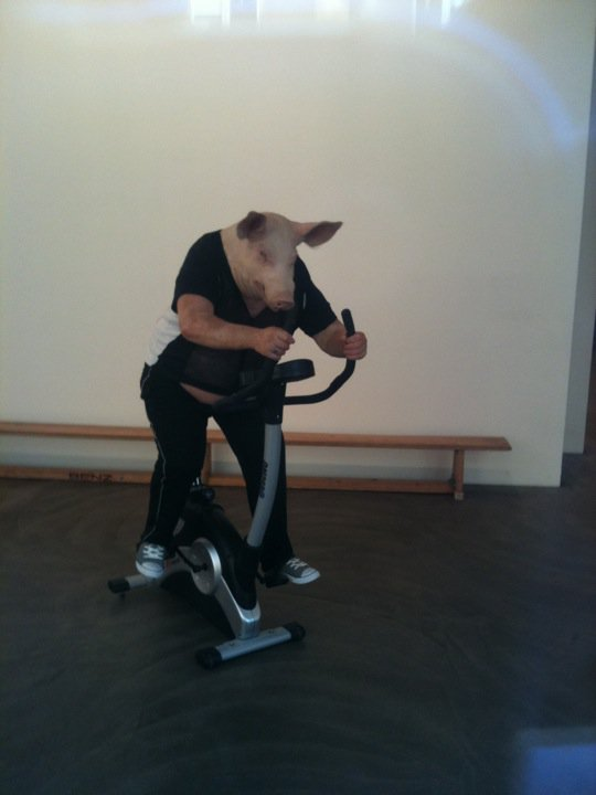 Pig works out