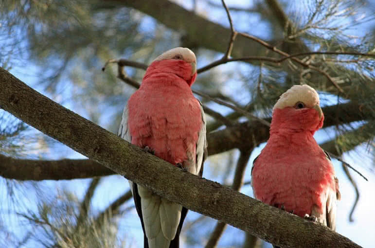 Cute Pinkish Wallpapers Top 10 Most Beautiful Parrots In The World The