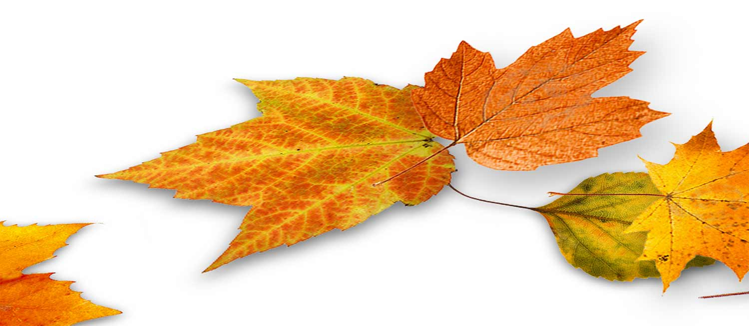 Html 5 Css The New Code – Seasonal Css: Falling Leaves In Css 3d With