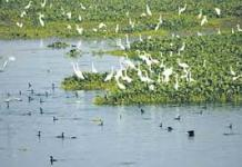 Threats and Conservation of Wetlands in India-II