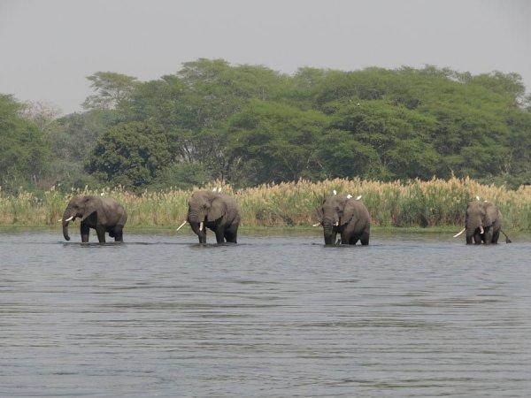 Elephants in Liwonde National Park, Malawi