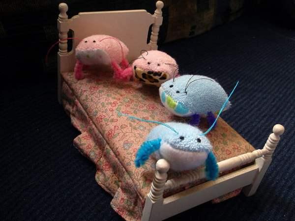 Bed Bugs - Cute - Flickr Mandy Jouan