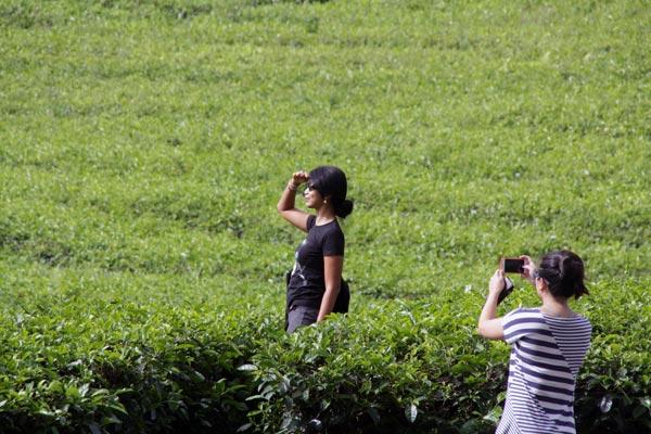 South Sumatra Pagar Alam Tea Plantations Tika