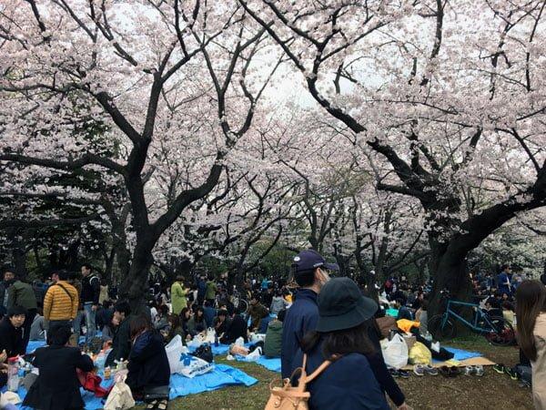 Tokyo Yoyogi Park Sakura Picnic