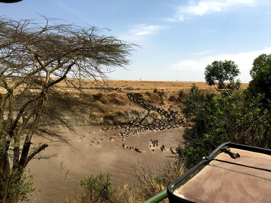 Witnessing the Migration on Safari in the Maasai Mara