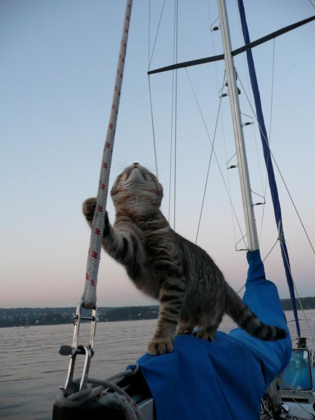 Gray Quotes Wallpaper Cats Make Great Sailors 26 Photos Click Here The Ocean