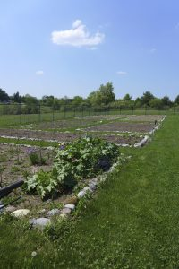 Produce from Owera's large organic garden is donated to Cazenovia's local food pantry.