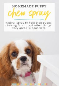 Homemade Spray to Stop Puppy Chewing Furniture - The ...