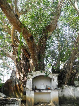 Bohdi Tree
