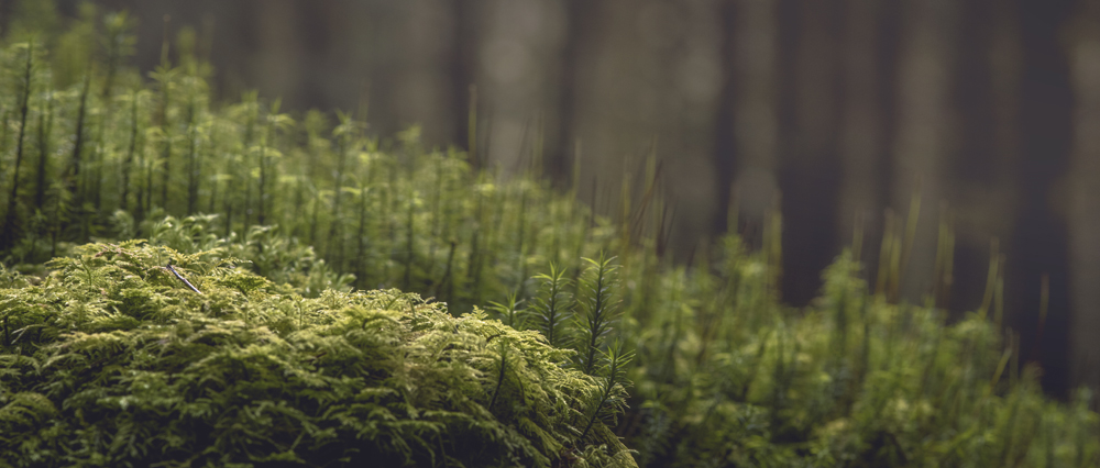 Small plant Wild Camping on Dartmoor forest