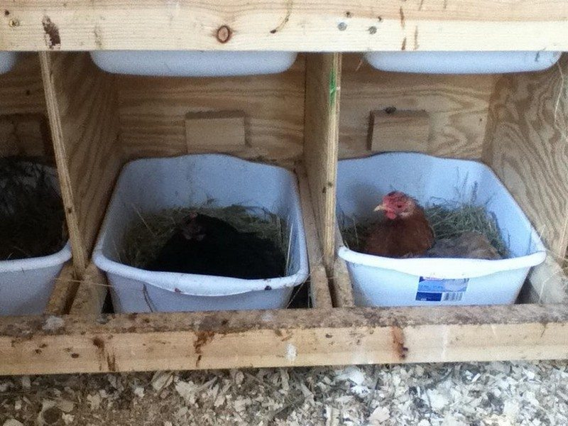 Chicken Nesting Box Ideas The Owner Builder Network