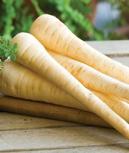 what are parsnips