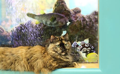 cat sitting near fish tank