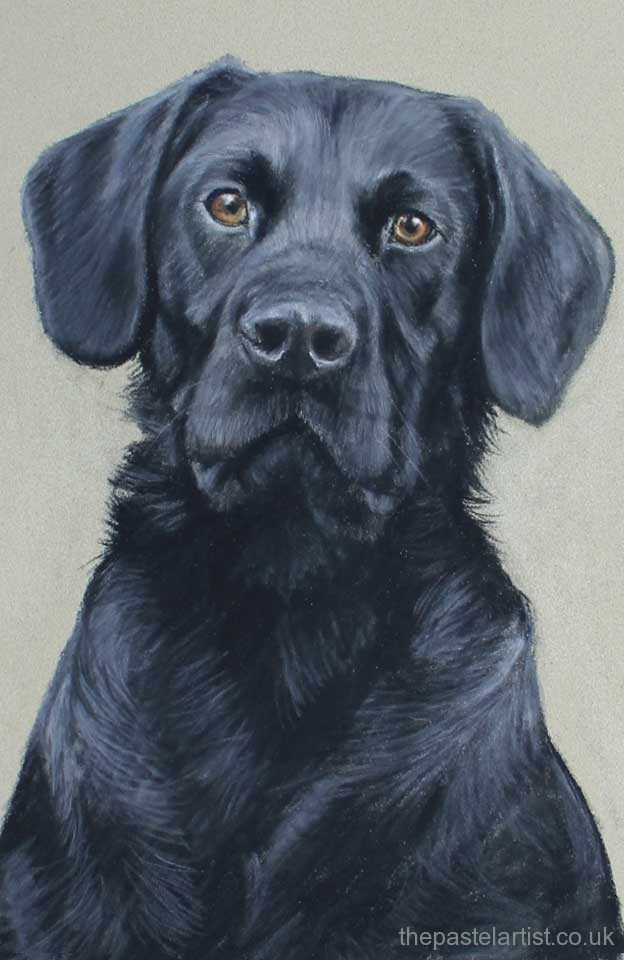 Yellow Sofa Pastel Dog Portraits By Nina Squire, The Pastel Artist