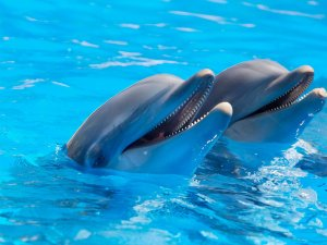 dolphins-copy
