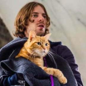 a-street-cat-called-bob