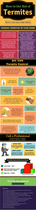 How to Get Rid of Termites: A Complete Guide with Infographic