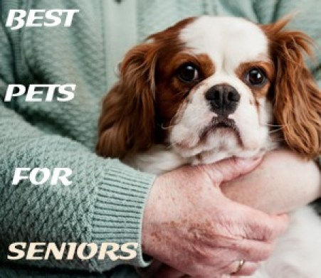 pets for seniors