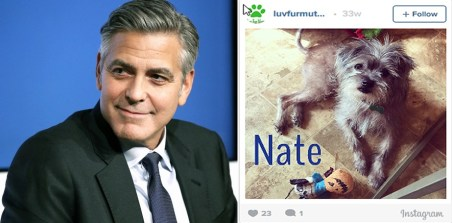 clooney adopts pup