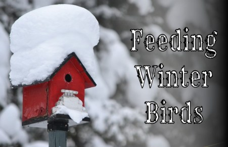 feeding winter birds