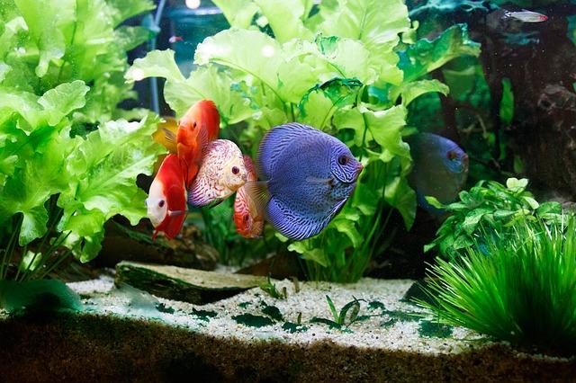 Aquarium Heater Size Calculator Fish Tank Heater Size